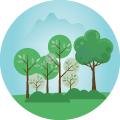 Ons eigen bos: Concept voor duurzame verzenddozen